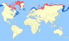 King Eider Map