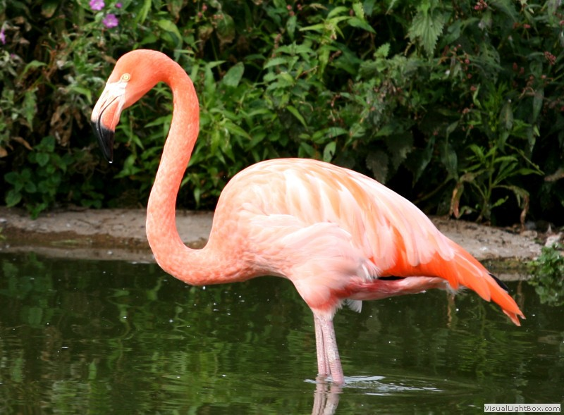 Know What Flamingos Eat? You'll Be Amazed to Find Out